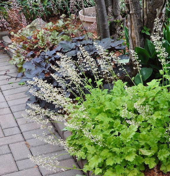great perennials for shade all of them deer resistant, flowers, gardening, perennials