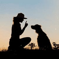 Razas de perros pequeños que ladran poco - Aperrados.com