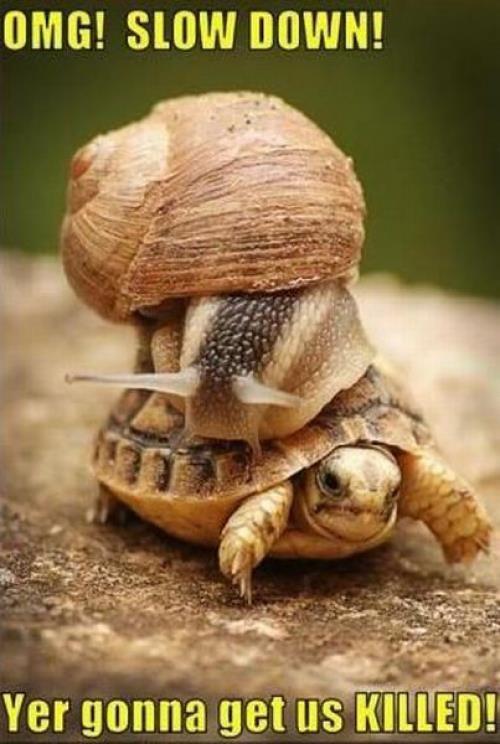 OMG! Slow Down!