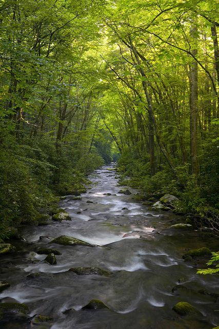 Oconaluftee River, Great Smoky Mountains National Park