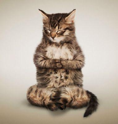 Lindas fotografias de gatos fazendo yoga! « Brasil Universo Digital                                                                                                                                                                                 Mais