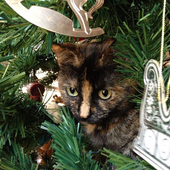 The Most Popular Cat Name In America Is... #refinery29  http://www.refinery29.com/2015/01/80371/most-popular-cat-names#slide-8  She is not okay with you taking down the Christmas tree.
