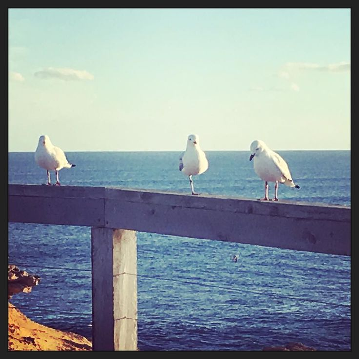@destinationwarrnambool #destinationwarrnambool #live3280 #love3280 #naturalbeauty #seagulls #thunderpoint by thechronicwhovian