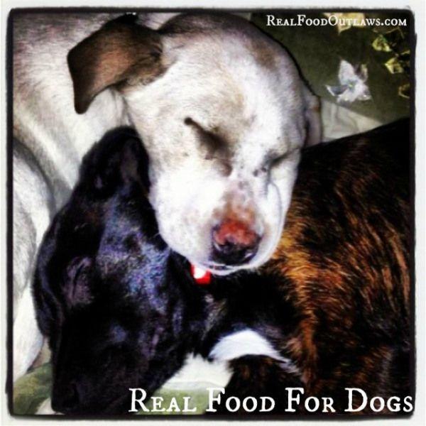 Best Species Appropriate Puppy Food