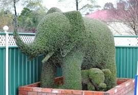 Oom Olifant Topiary Boom