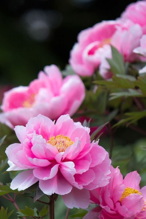 Pretty Flower 1455 best all the pretty flowers images on pinterest | pretty