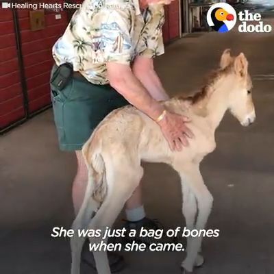 Baby Wild Horse Too Skinny When Rescued