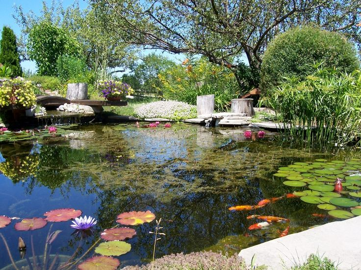 1000 images about pond biofilter diy on pinterest for Diy garden pond