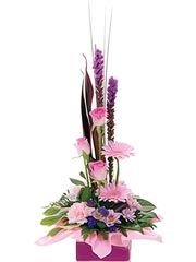 Spring Delight For Sale - Same Day - Free Delivery