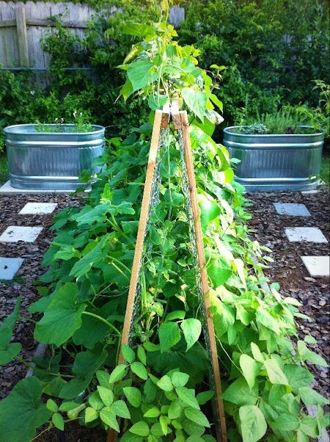 trellis 4 squash: Edible Gardens, Gardening Outdoors, Food Gardens, Garden Vegetables, Garden Backyard Ideas, Vegetable Gardens, Vegetable Gardening