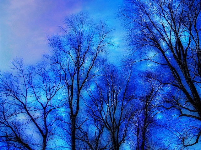 Zima Blue Trees by birdtoes, via Flickr