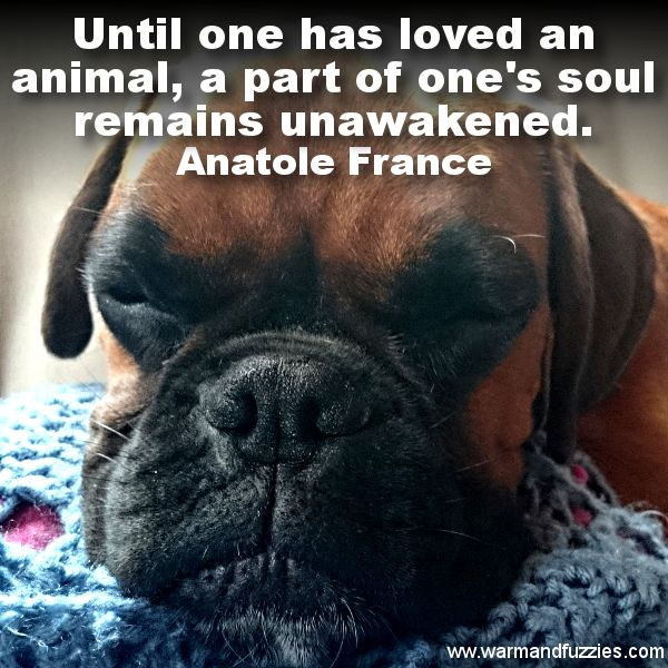 Love Your Pet #pets #animals #love #warmandfuzzies #quotes