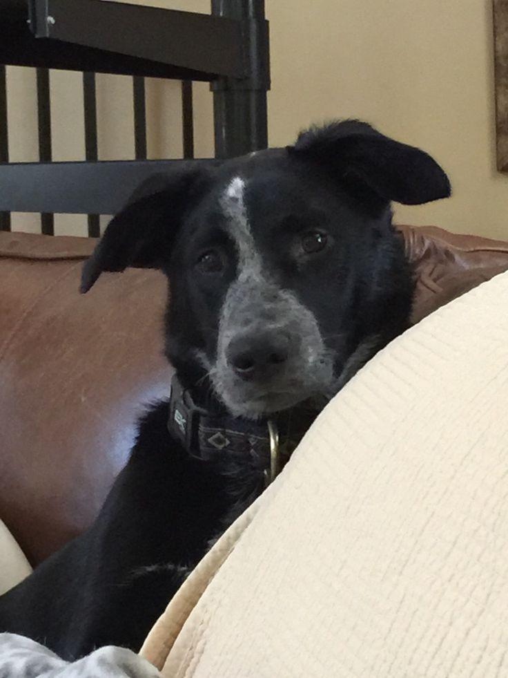 22 Best Barney The Legendary Dog Images On Pinterest