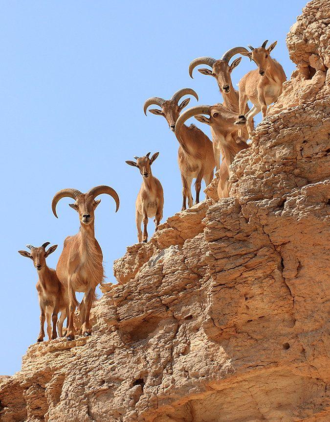 Curiosity by Yaniv Guy -Negev desert, Israel