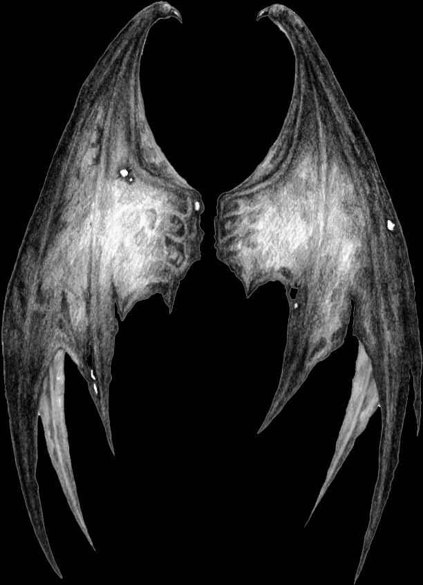 Wings Png Best Photo Background Wings Png Learn Photo Editing