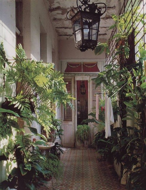 tropical porch, inside garden: New Orleans, Hallways, Jungle, Indoor Gardens, Greenhouses, Bohemian Home, Green Rooms, Indoor Plants, Inside Gardens