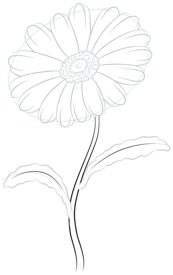Drawing The Perimeter Of The Lower Ventricles Floraldrawings In