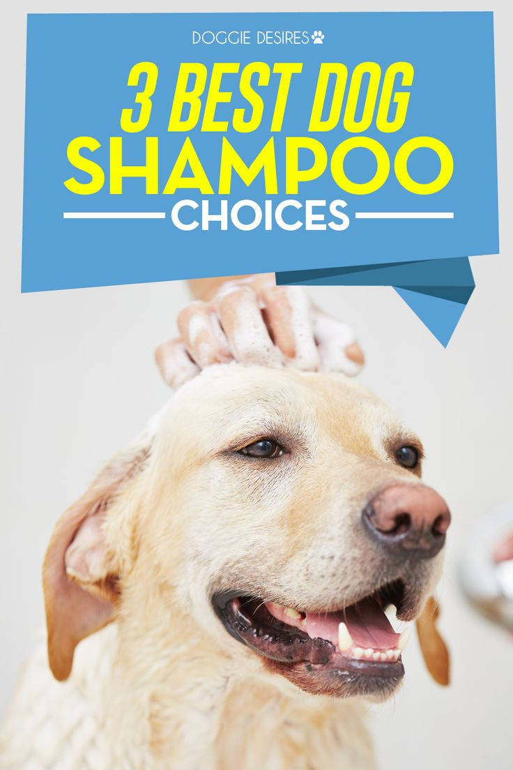 Learn the 3 best dog champoo choices >> http://doggiedesires.com/best-dog-shampoo-choices/