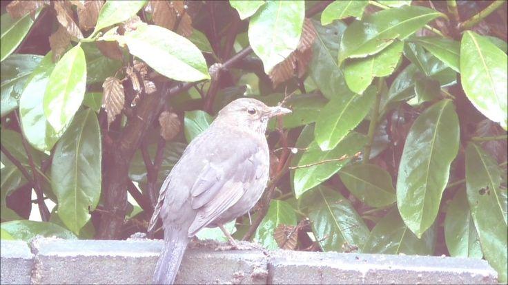 Vogel Doku