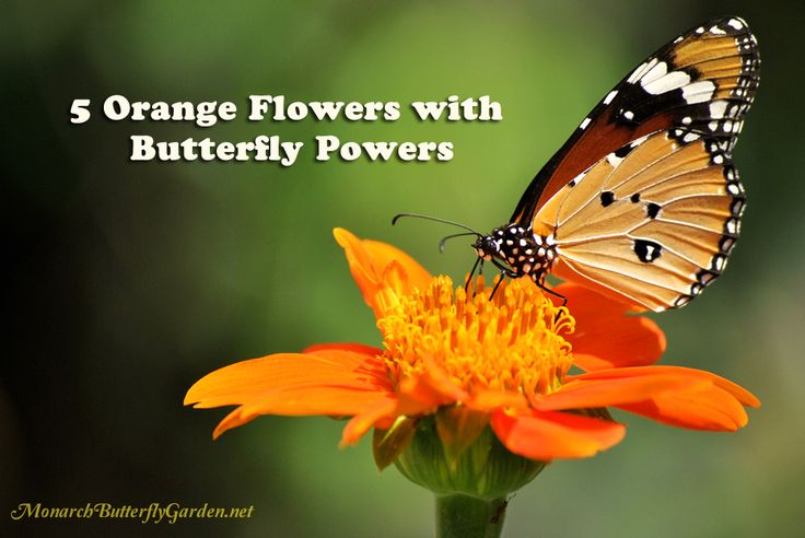 Looking For Alaska Flower: Best 25+ Orange Flowers Ideas On Pinterest