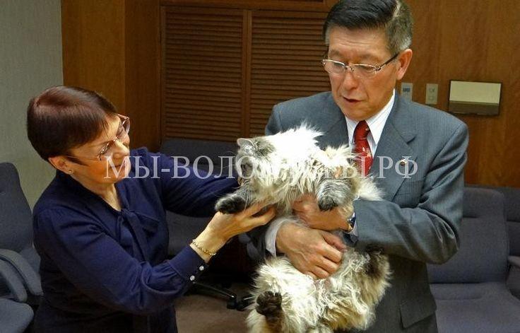 Японский губернатор, получивший кота в подарок от Путина, построит приют для животных - http://xn----dtbjxcjfbus6gj.xn--p1ai/dogs/%d1%8f%d0%bf%d0%be%d0%bd%d1%81%d0%ba%d0%b8%d0%b9-%d0%b3%d1%83%d0%b1%d0%b5%d1%80%d0%bd%d0%b0%d1%82%d0%be%d1%80-%d0%bf%d0%be%d0%bb%d1%83%d1%87%d0%b8%d0%b2%d1%88%d0%b8%d0%b9-%d0%ba%d0%be%d1%82%d0%b0/