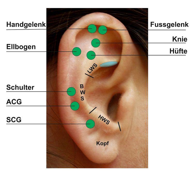 35 best ANATOMIE Körper Body images on Pinterest | Acupuncture ...