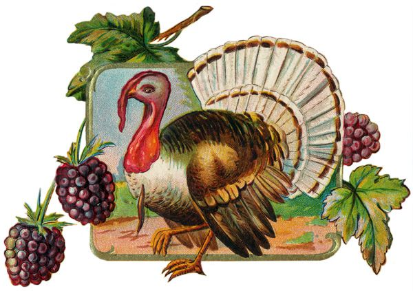 Free Turkey Clipart - Image 1: