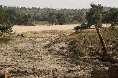 Zandlandschap in de Veluwe