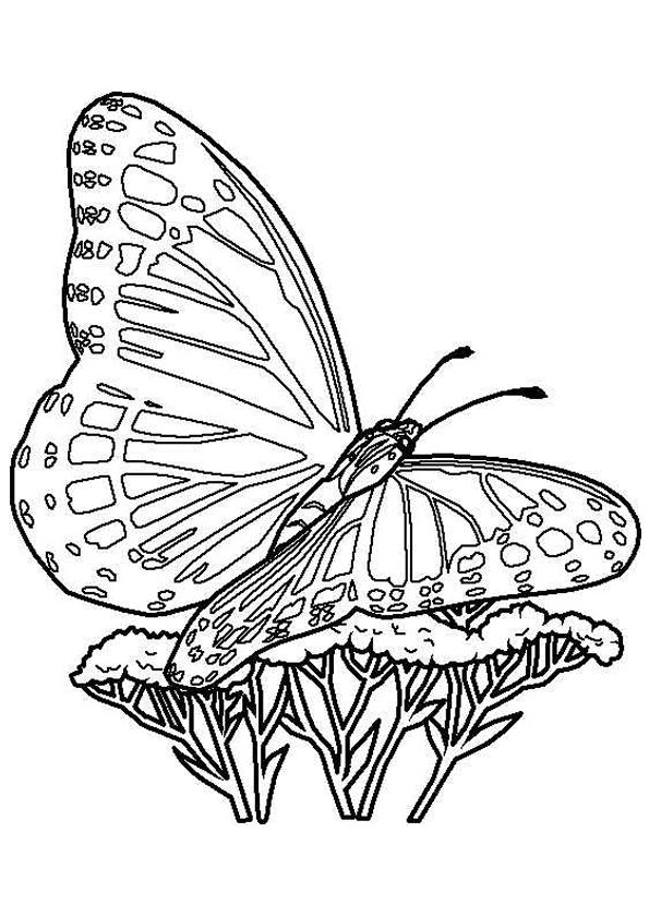 1000 images about butterflies to color on pinterest