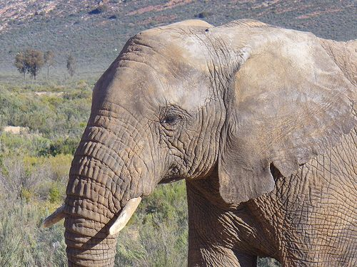 Ellie at Aquila Private Game Reserve. Quote & Book:http://www.south-african-hotels.com/