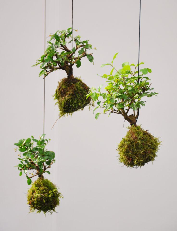 die besten 25 indoor tropische pflanzen ideen auf. Black Bedroom Furniture Sets. Home Design Ideas