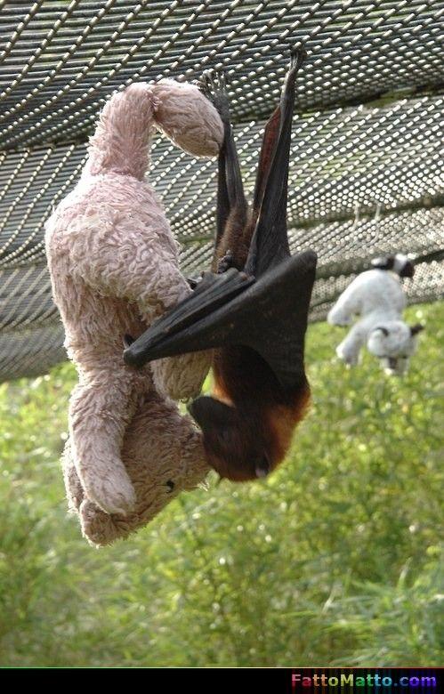 Pipistrello con il suo orsacchiotto - via FattoMatto.com - #FattoMatto