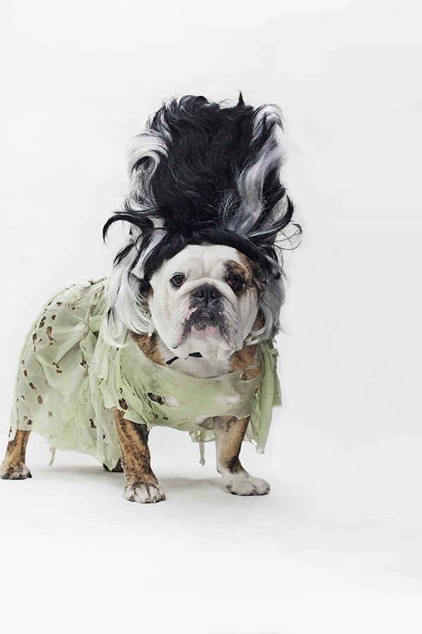26 best Dog Costumes images on Pinterest | Dog, Animals and Dog ...