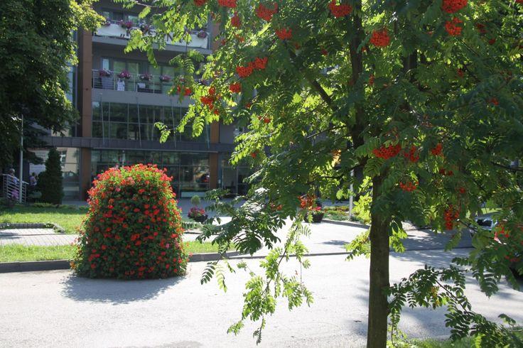 Autor: Urząd Miasta i Gminy Busko-Zdrój