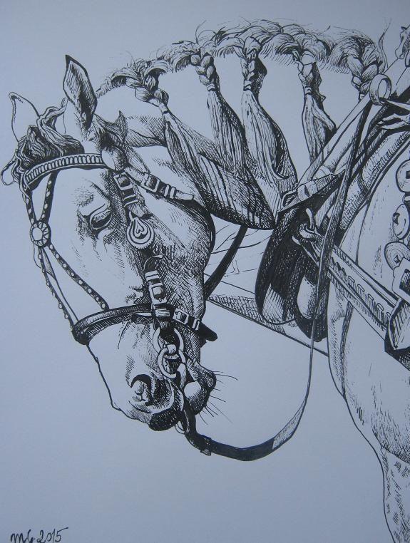 kůň v postroji perokresba, formát A4, nerámováno