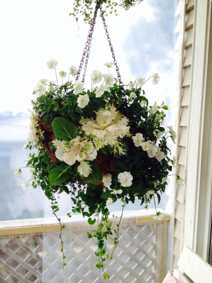 Classic white and green florentina hanging basket