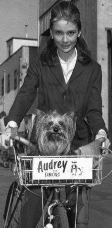 """Audrey Hepburncon su fiel acompañante,Famous, un Yorkshire que acompañaba a la actriz a sus sesiones de fotos e incluso salió en la película """"Una Cara con Ángel""""."""