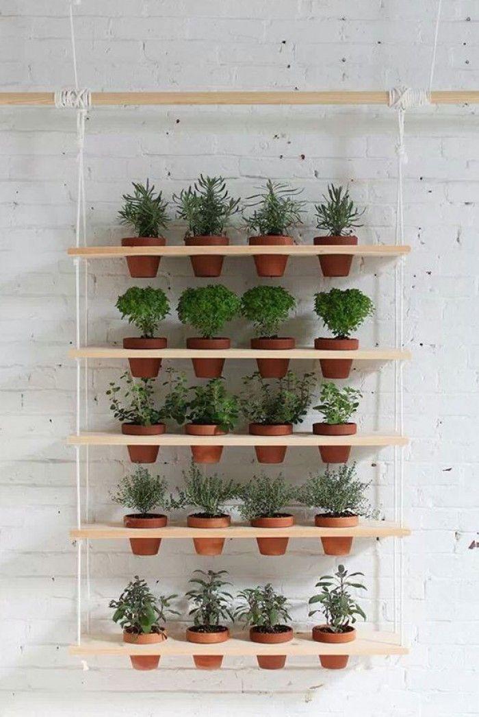 Mooi voor een kleine tuin of een balkon.