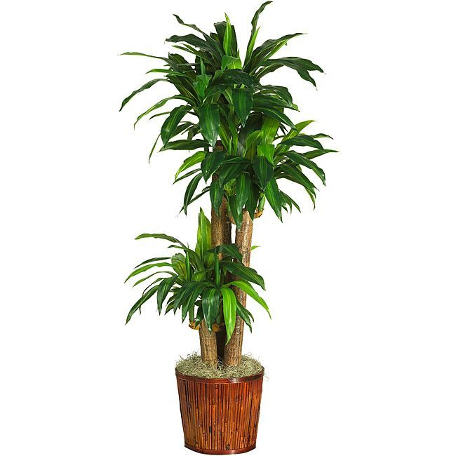 Corn Stalk Dracaena 62 Inch Real Touch Silk Plant Porch Plantspotted Plantsindoor
