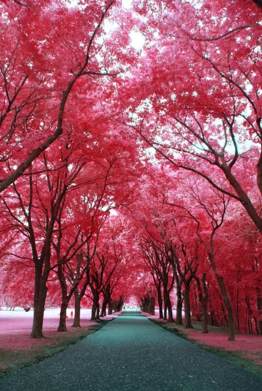 travelingcolors:  Infrared St. Francis | Wisconsin (by Retinal Fetish)