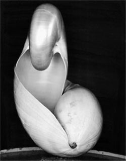 Edward Weston - Shell 1927. S) - one of my favorite photographs