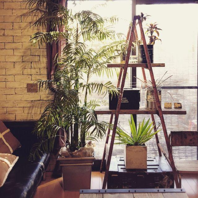 ranranさんの、On Walls,IKEA,グリーン,雑貨,DIY,ディスプレイ,リメイク,脚立,リメ缶,建て売り,インスタ→TOMOOO.25についての部屋写真