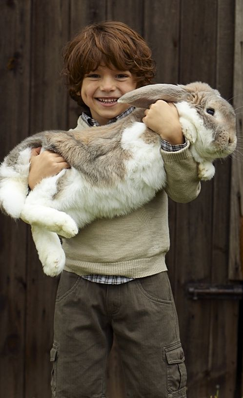 Boy and Big Bunny