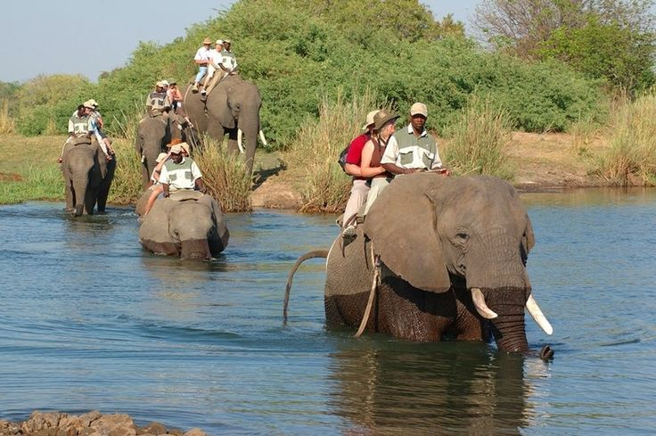 Elephant Back Safari: Get the opportunity to ride on these magnificent animals in their natural habitat.