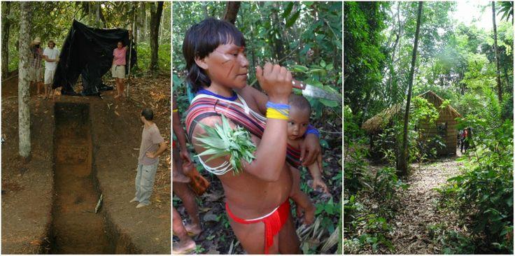 Pesquisa – Estudo do Inpa afirma que povos pré-colombianos moldaram a flora da floresta amazônica