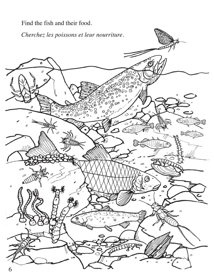 Freshwater ecosystem coloring pages coloring pages for Water pollution coloring pages