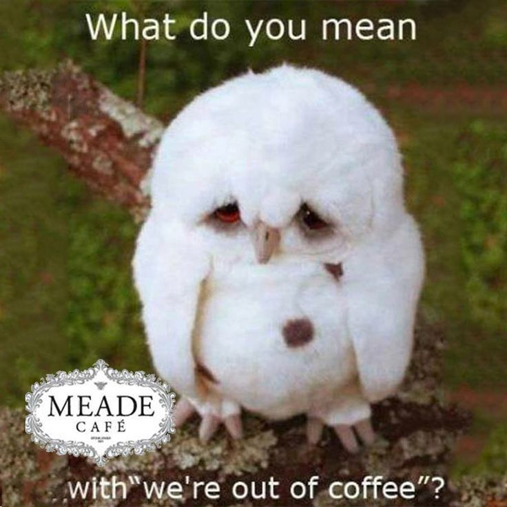 "Don't worry at Meade Cafe George we would never say ""we're out of coffee"" - Come and enjoy our famous house roasted coffee and try our delicious eats from our Menu. #Coffee #meadecafe"