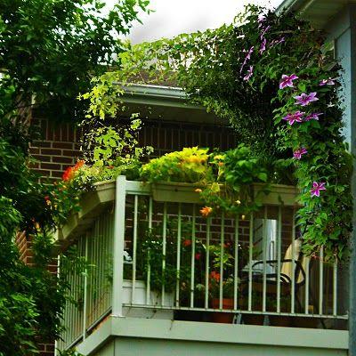 The 6x8 garden: Balcony garden inspiration