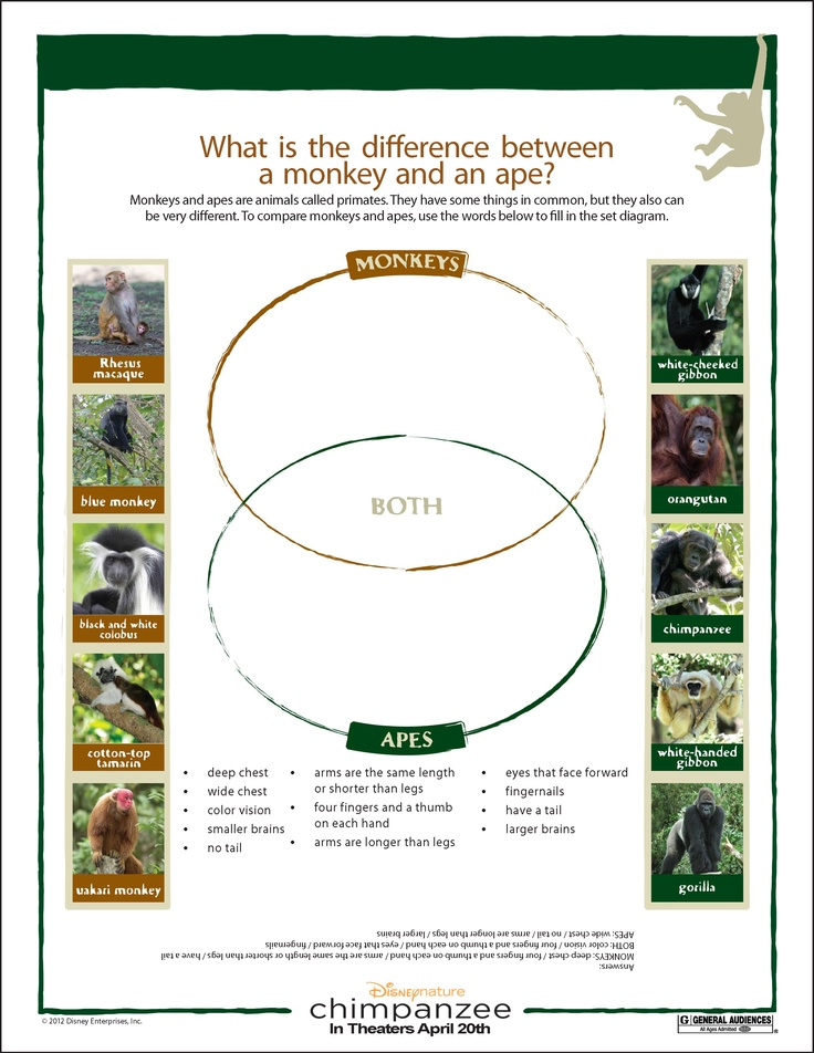 difference between workbook and worksheet The differences between a spreadsheet and a worksheet in excel a spreadsheet and a worksheet are the same a workbook however, can contain many worksheets or spreadsheets what is the difference between a spreadsheet and a worksheet.