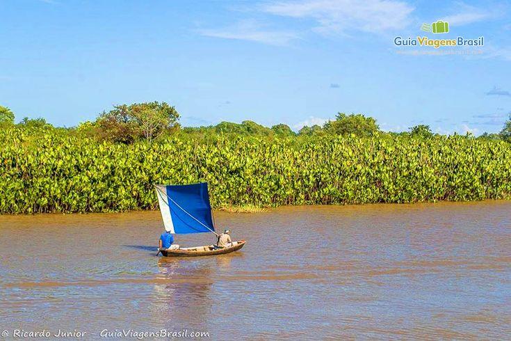 Uma vegetação interessante margeia o Rio Parnaíba até seu delta >>> http://www.guiaviagensbrasil.com/blog/o-passeio-ao-delta-do-parnaiba/